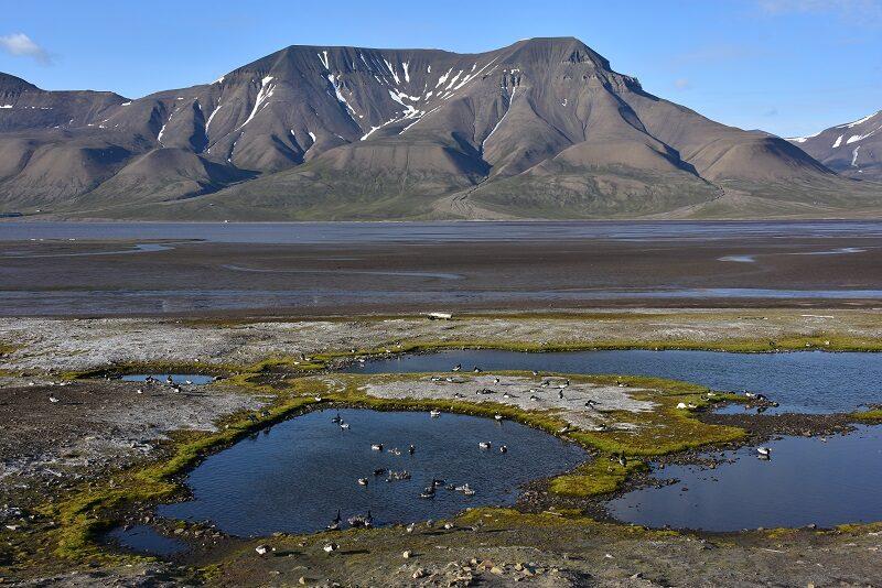 Adventsfjorden, Svalbard