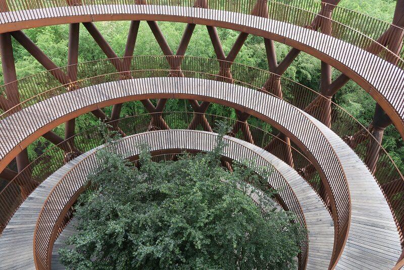 Udsigt til træerne midt i Skovtårnet