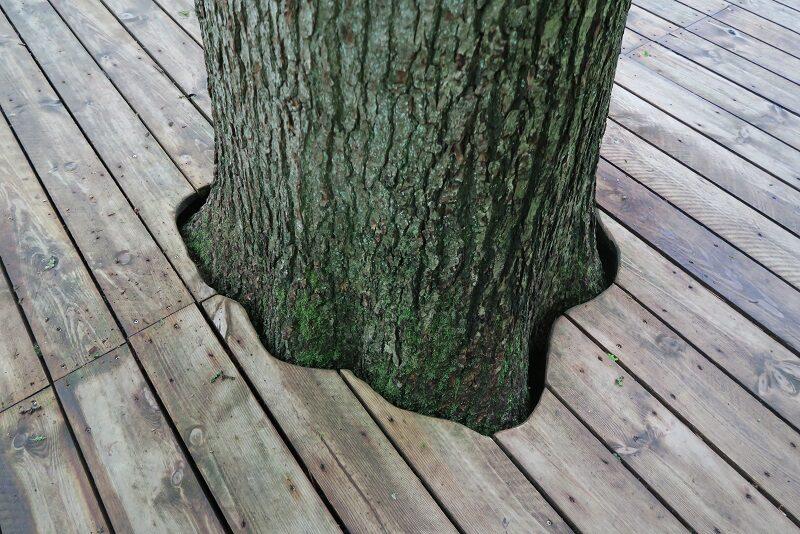 Træ midt på plankebroen