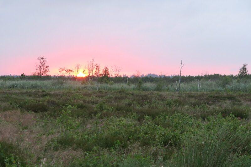 God morgen fra Lille Vildmose